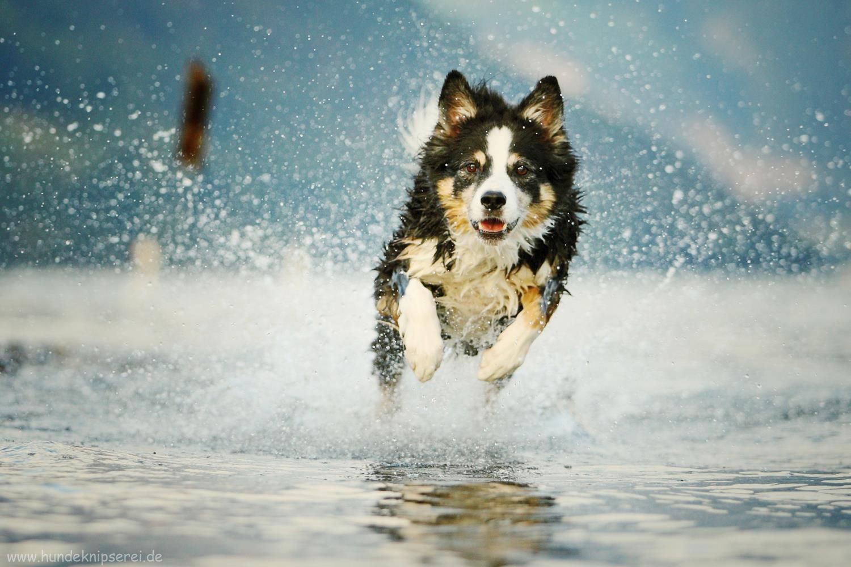 Tyler im Wasser
