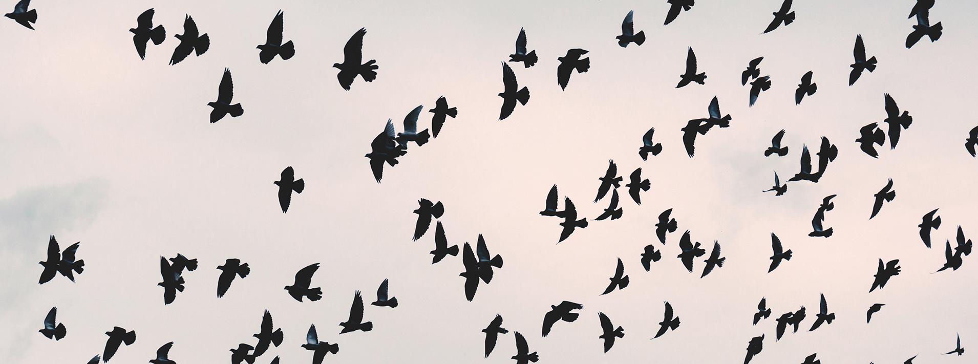 flying_pidgeons 2
