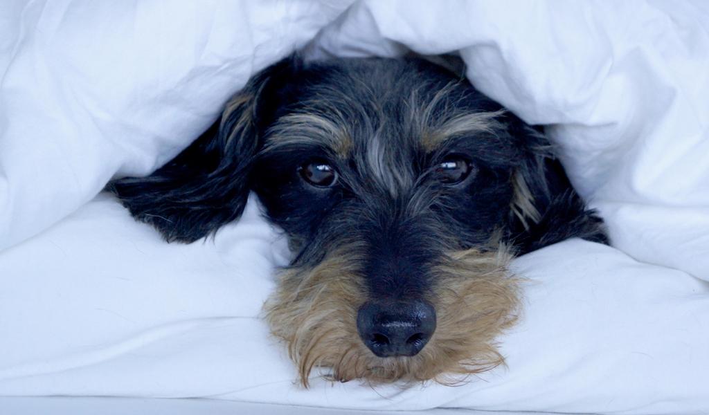 Amélie-schleicht-sich-ins-Bett