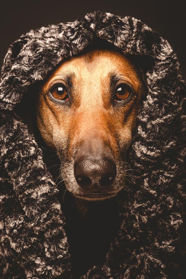 Legat weiser Hund