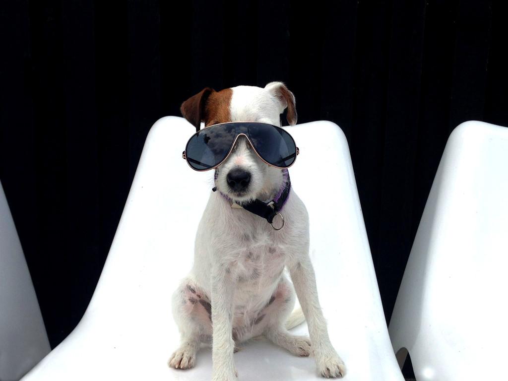 Julie mit Sonnenbrille