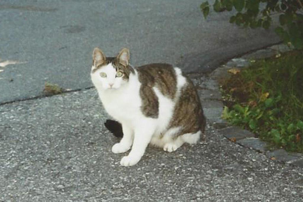 Rudolf Kuster vermisste Katze