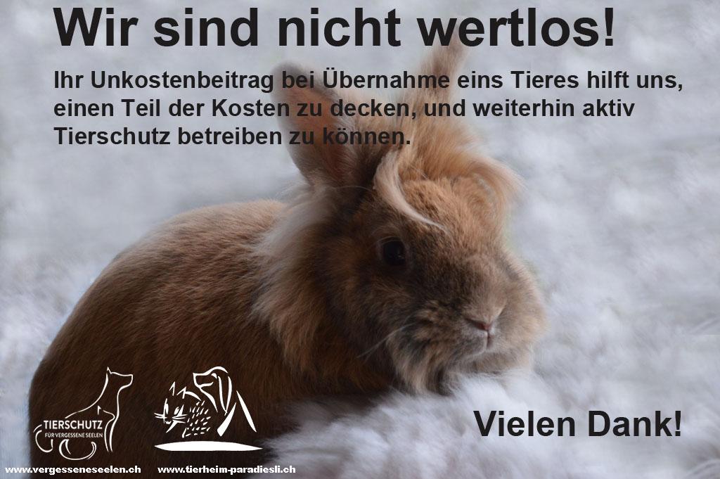 Wir sind nicht wertlos Kaninchen Kampagne