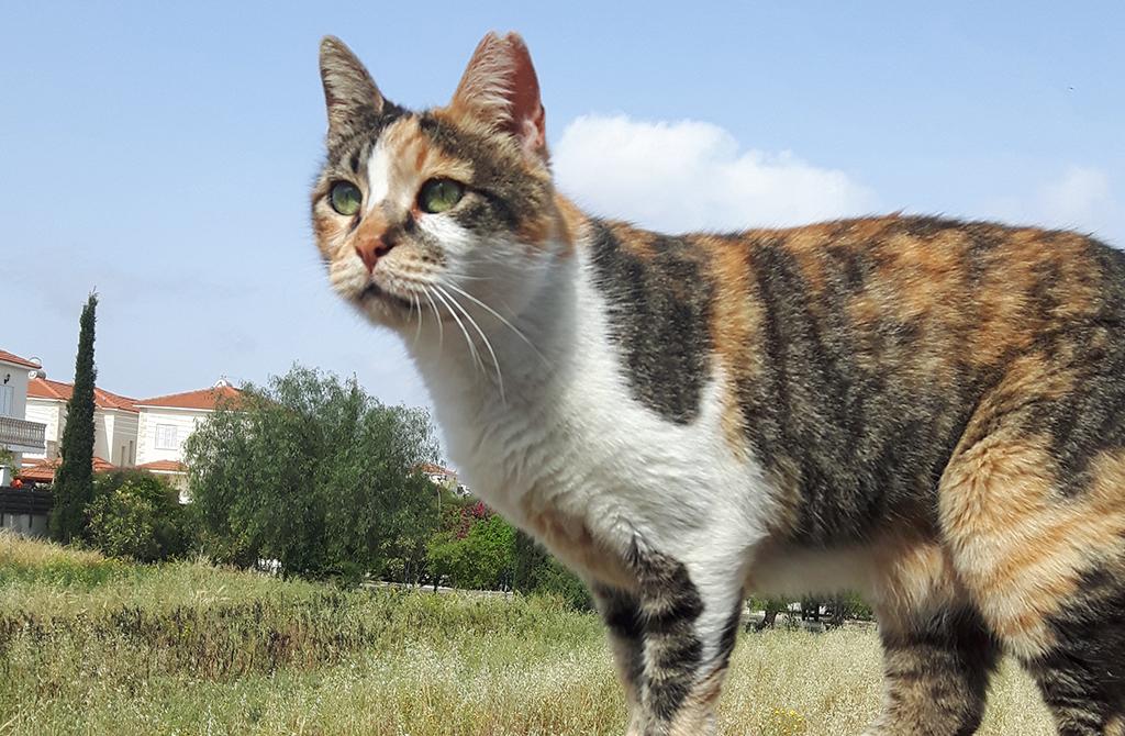 Aisha - Zypern