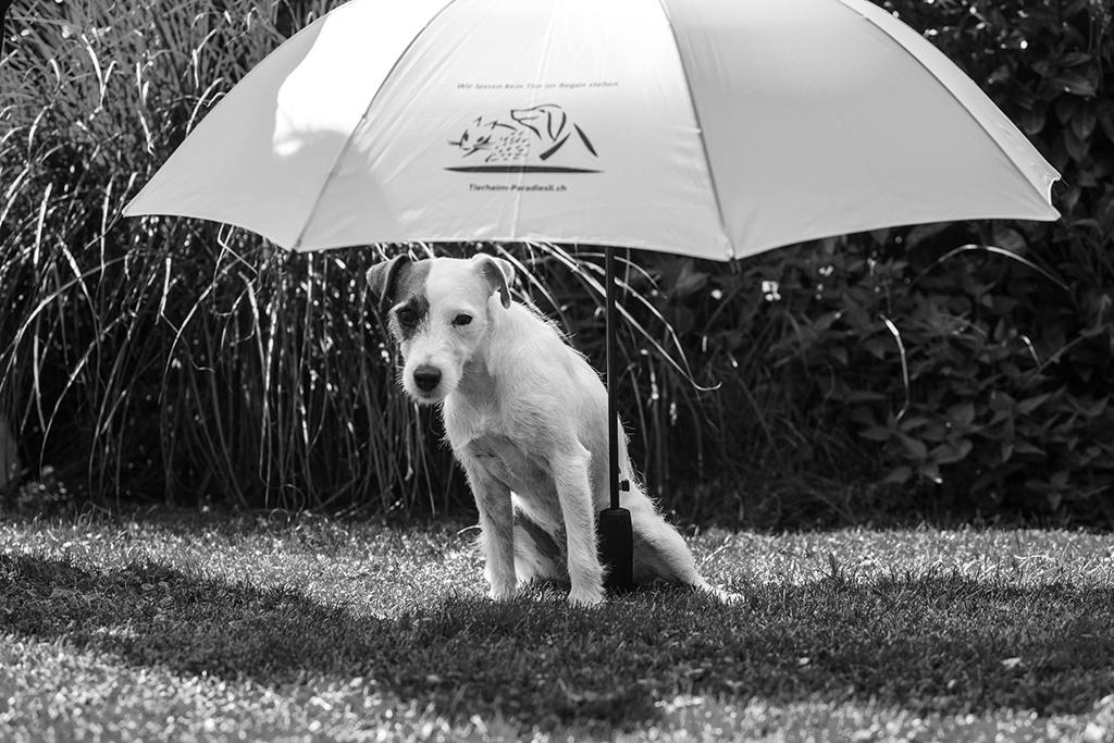 Schirm weiss Julie 2 sw
