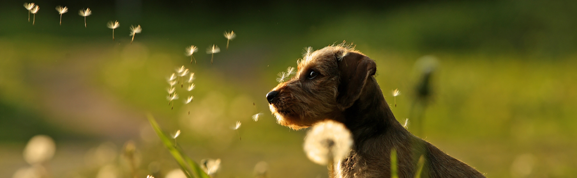 Slider Original Hundeknipserei Pusteblumen2