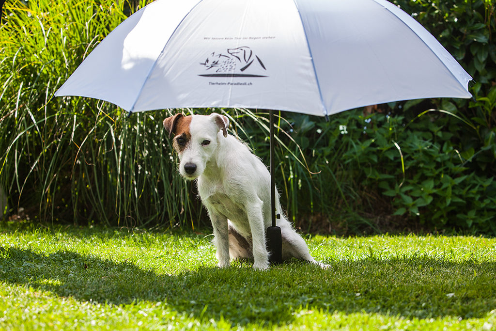 Schirm weiss Julie 2