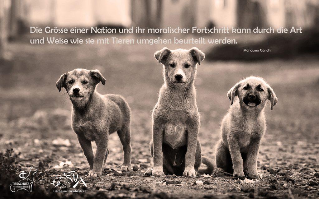 Strassenhunde Tierheim