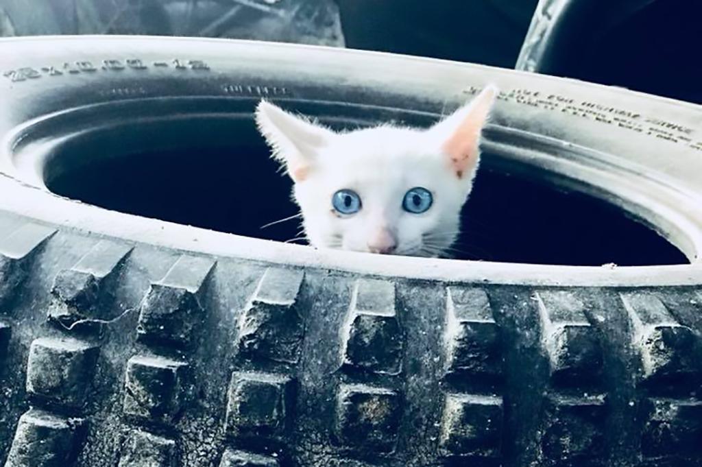schöne Bilder Kätzchen Tookta2