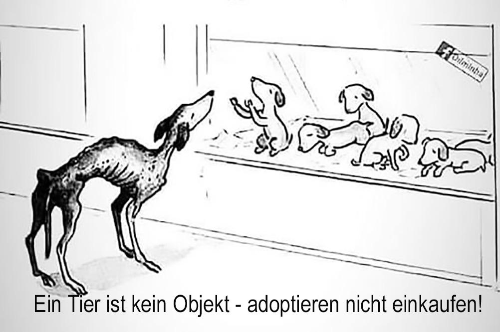 Adoptieren nicht kaufen