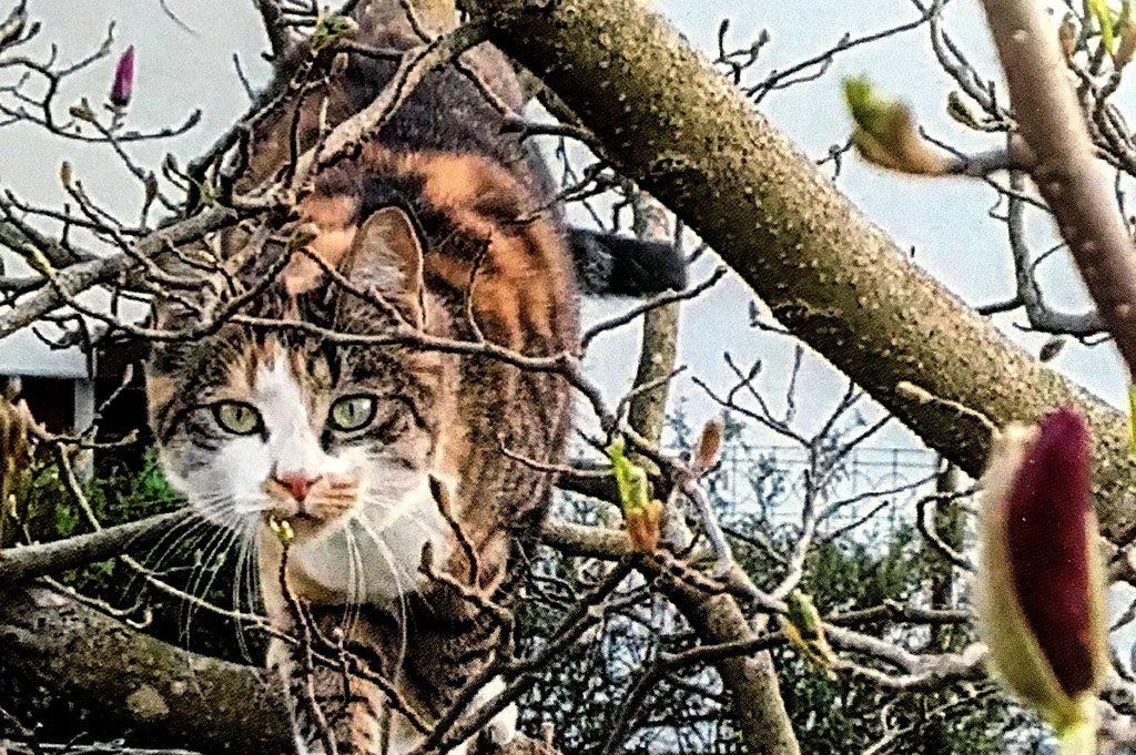 ava magnolienbaum
