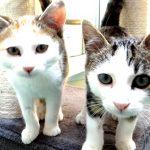 Cara und Clyde