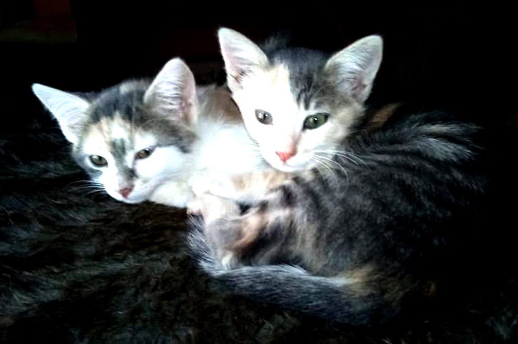 Soraya und Giselle