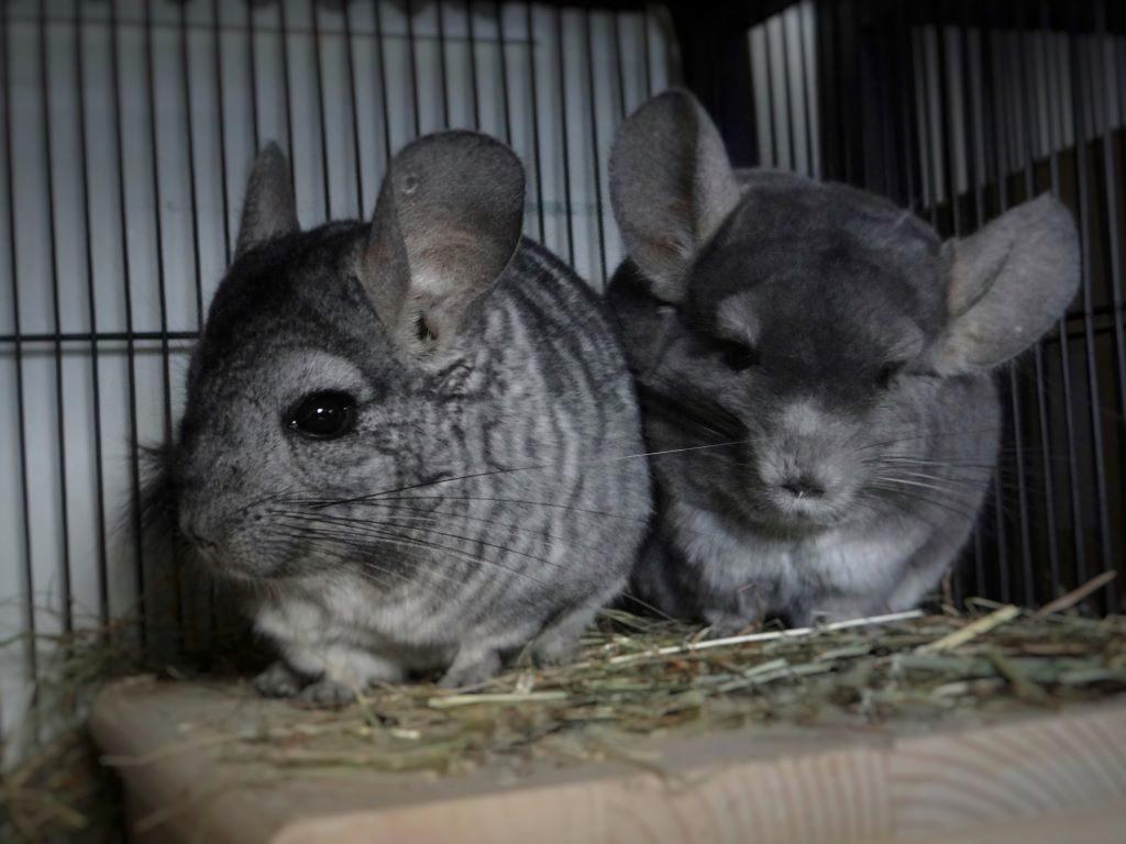 Jerry und Babu1-min