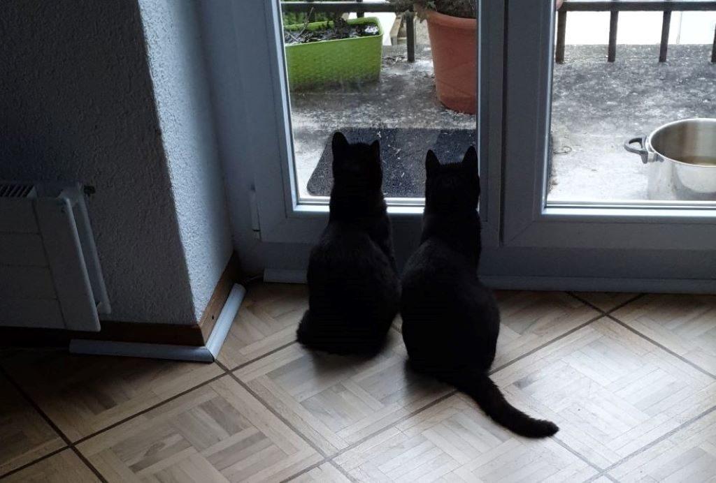 oskar und osmar-min3