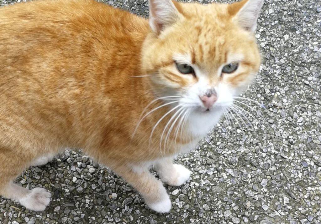 Katze-min1
