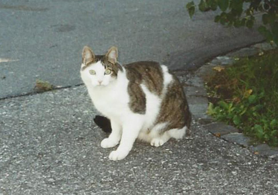 Rudolf-Kuster-vermisste-Katze