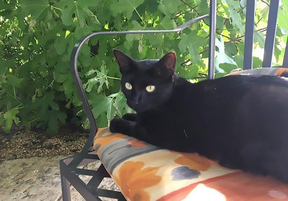 vermisst schwarze Katze